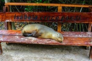 Isola Isabela, Galapagos: cosa vedere, cosa fare, informazioni, guida !