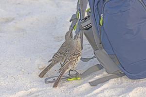 Viaggio alle isole Galapagos - cosa vedere, cosa fare, la guida 2021 - isola genovesa