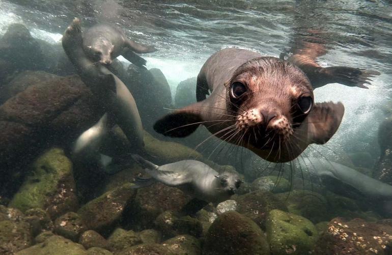Galapagos quando andare: visita le isole in questi mesi!