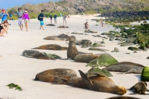 Española, Galapagos: informazioni e consigli di viaggio- Gardner bay