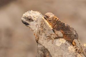 Viaggio alle isole Galapagos - cosa vedere, cosa fare, la guida 2021 - isola floreana