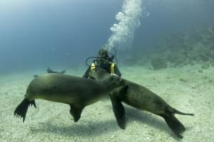 Viaggio alle isole Galapagos - cosa vedere, cosa fare, la guida 2021 Immersioni Galapagos