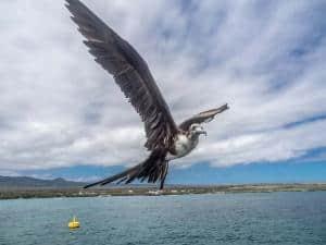 Galapagos come arrivare: voli, informazioni e consigli su come raggiungere le isole