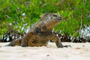 Viaggio alle isole Galapagos - cosa vedere, cosa fare, la guida 2021 - come arrivare alle isole galapagos