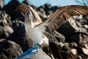 Viaggio alle isole Galapagos - cosa vedere, cosa fare, la guida 2021 - animali alle isole Galapagos