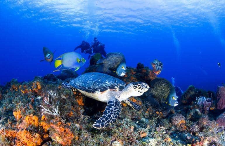 Cozumel, Messico: le spiagge, cosa vedere, le immersioni e lo snorkeling