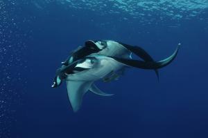 Immersioni alle Galapagos: escursioni sub da Santa Cruz e San Cristobal