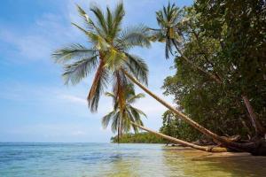Costa Rica, itinerario di 2 settimane: cosa vedere, cosa fare- Parco Cahuita