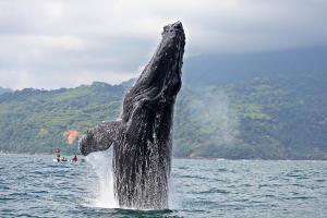 Costa Rica, itinerario di 2 settimane: cosa vedere, cosa fare- Megattera