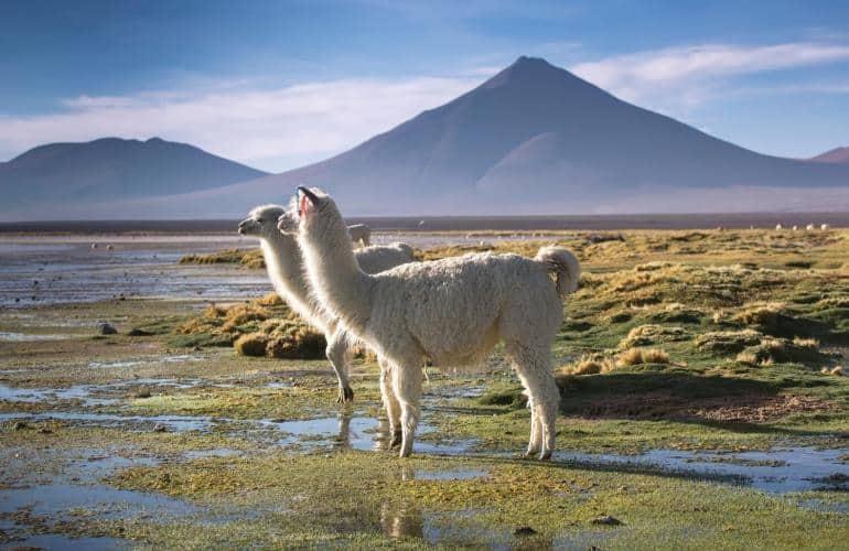 Perù e Bolivia Tour di gruppo 2021: un viaggio nel meglio dei due Paesi